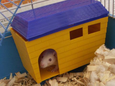 Видео как сделать домик для крысы своими руками
